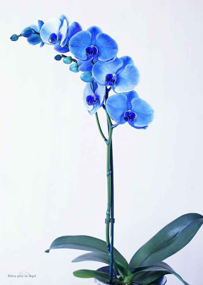 orquidea011